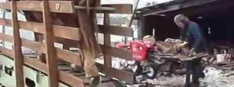 Ovo izgleda kada cijepate drva na konjski pogon!