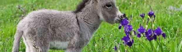Po nama ovo je najljepše magare na svijetu?