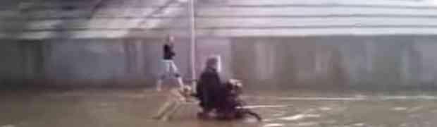 Pas gura hendikepiranog vlasnika kroz poplave (Video)