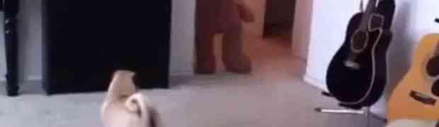 Pogledajte šta se dogodi kada preplašite svog psa (VIDEO)