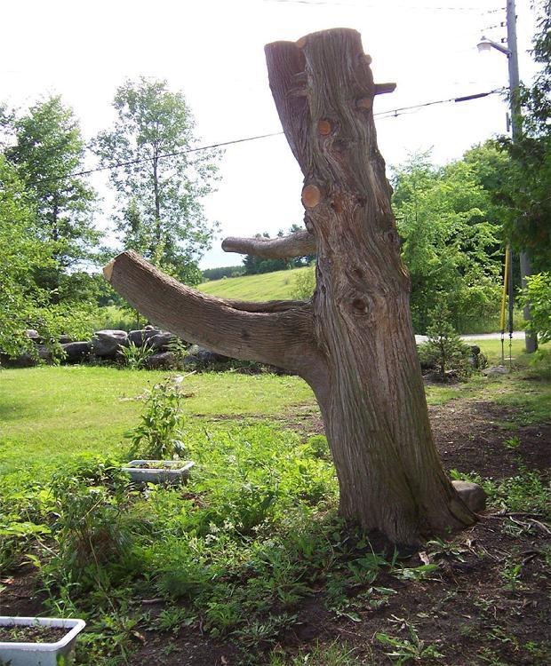 drvo-zmaj