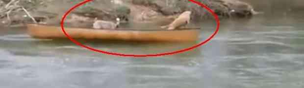 Nećete vjerovati ko je spasio ova dva psa (VIDEO)