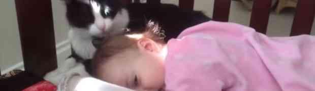Kad mačka umisli da je frizer (VIDEO)