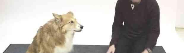Pogledajte kako psi reaguju kada čovjek laje na njih (VIDEO)