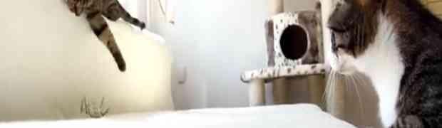 Pogledajte reakcije mačića kada su vidjele robotskog pauka (VIDEO)