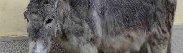POUČNA PRIČA: Čovjek zakopao magarca koji je upao u bunar, ali se dogodilo nešto nevjerovatno
