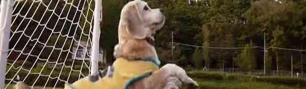 Preslatki mali pas čini čuda s loptom od kojih će vam zastati dah (VIDEO)