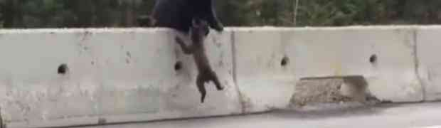 MAJČINA LJUBAV JE NAJJAČA! Evo kako ženka medvjeda spašava svoje mladunče