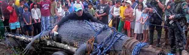 Ulovili najvećeg krokodila na svijetu no onda im se dogodilo nešto strašno (VIDEO)