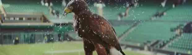 Od kako je on stigao, golubovima nema ni traga! (VIDEO)