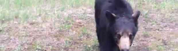 Tokom treninga u šumi naletjeli su na medvjeda te jedva izvukli živu glavu (VIDEO)