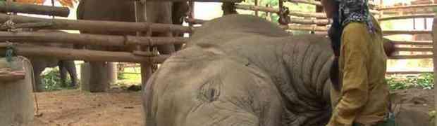 JAKO EMOTIVNO: Žena malom slonu pjeva uspavanku