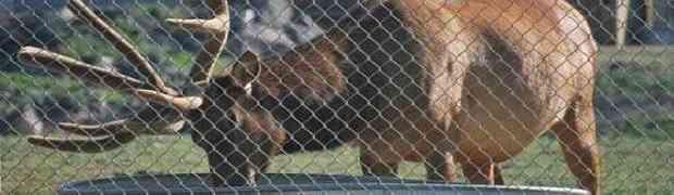 Radnici zoološkog vrta su bili šokirani kada su vidjeli šta ova velika životinja radi pokraj vode