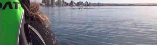 Otac i kćerka plovili kajakom a onda su iznenada doživjeli nešto što će pamtiti cijelog života!