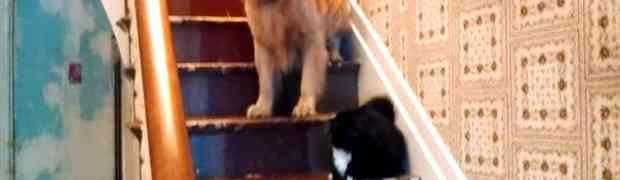 Ovakvog psa kukavicu nikada niste vidjeli u svom životu! (VIDEO)