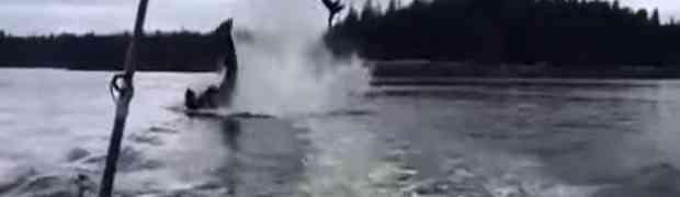 Nećete vjerovati šta je kit ubica uradio malom morskom lavu! (VIDEO)