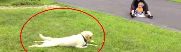 Ovaj pas ima zanimljiv način kako se zaustavlja, zabavio je 5 miliona ljudi (VIDEO)