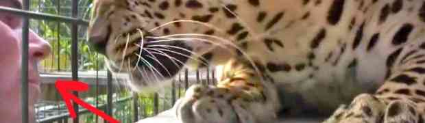 Ovaj čovjek se približio kavezu leoparda, ali ni sanjao nije da će leopard ovako reagovati