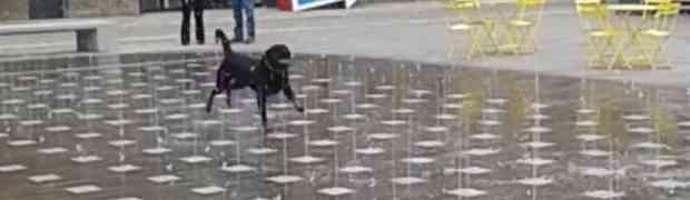 Ovaj pas je najsretnije živo biće na svijetu zbog onoga što radi (VIDEO)