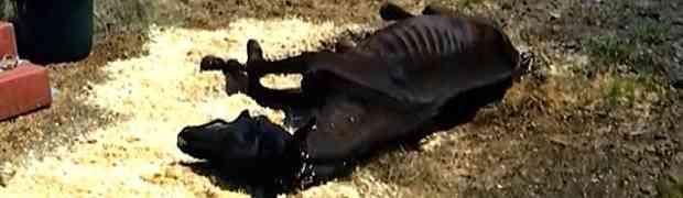 Pronašla je napuštenog konja kako na zemlji leži i umire, no niko se nije nadao ovakvom čudu...