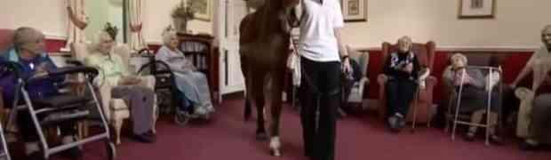Dovela je konja u starački dom. Ono što se desilo u nastavku će vas oduševiti