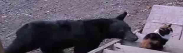 Medvjed je ušao u dvorište i prišao njihovoj mački. Nećete vjerovati šta se dogodilo u nastavku