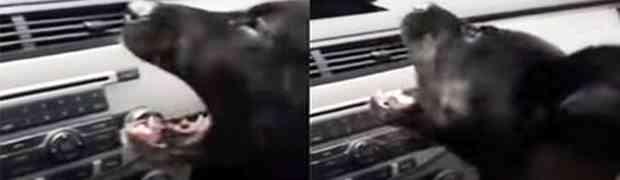Upalio je klimu u svom automobilu, no reakcija njegovog psa nasmijala je milione