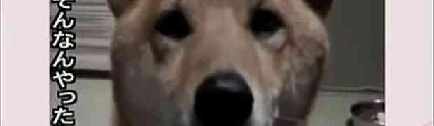 Zamolila je psa da laje tiše: NJEGOVA POSLUŠNOST NASMIJALA JE SVIJET (VIDEO)