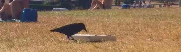 Vrana je u parku pronašla kutiju pizze. Ono što je uradila ostaviće vas bez riječi!
