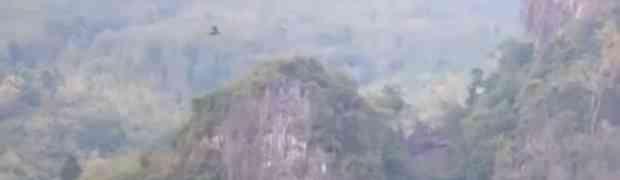 U početku je mislio da snima rijetku pticu u daljini, ali kada je zumirao uslijedio je šok! (VIDEO)
