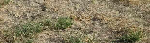 Možete li na ovoj slici pronaći zmiju za manje od 10 sekundi? Mnogi su pokušali, ali uzalud!