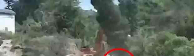 Osjekao je motorkom ogromno drvo, a onda je DEBELO ZAŽALIO ISTE SEKUNDE! (VIDEO)