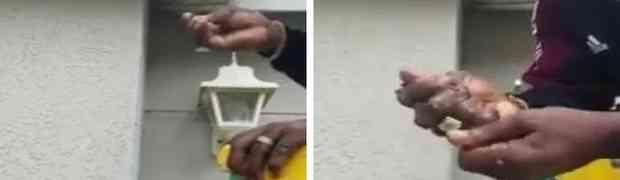 Ovaj čovjek je hladno skinuo osinje gnijezdo sa kuće, i zgnječio ga GOLIM RUKAMA! (VIDEO)