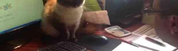 Sa ovom macom nema šale. Pipni miša ako smiješ (VIDEO)