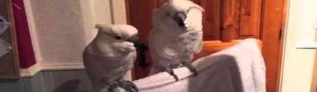 Vlasnik je zasvirao i zapjevao, a onda su oni uradili nešto PRESMIJEŠNO (VIDEO)