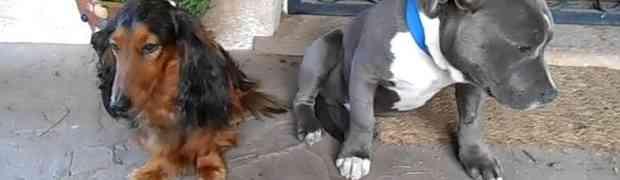 Pitao je svoje pse ko mu je izgrizao cipelu. Njihova reakcija DOVEŠĆE VAS DO SUZA (VIDEO)