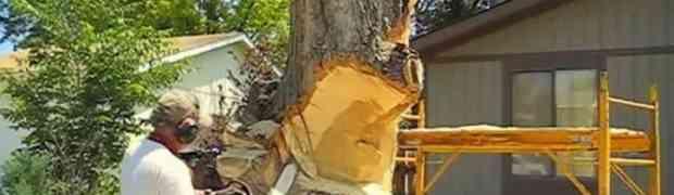 Uzeo je motornu pilu i počeo rezati stablo. Kad je završio svi su ostali bez teksta