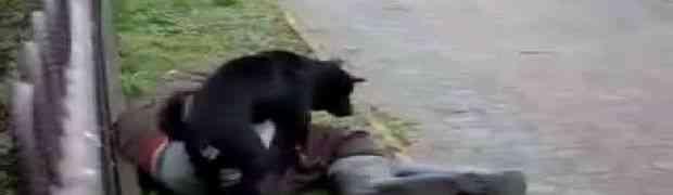 Šta se desi kada popijete malo previše, a tu se nađe neki pas?! (VIDEO)