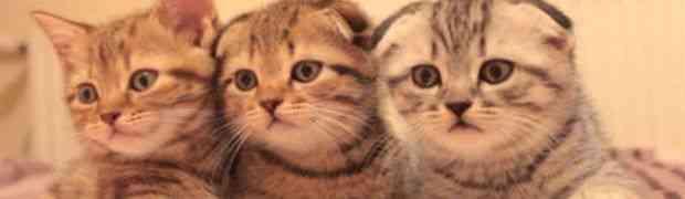 Kako izgleda munjevito buđenje radoznalih mačića? (VIDEO)