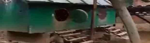 Ovako izgleda NAJVEĆI PIJETAO NA SVIJETU: Kada vidite šta će izaći iz ovog kokošinjca, PAŠĆETE SA STOLICE! (VIDEO)
