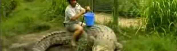 Odlučio je da krokodilu sjedne na leđa, no BOLJE DA NIJE! (VIDEO)