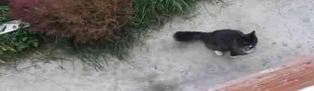 Nećete vjerovati šta vlasnik mora uraditi da ova maca uđe u kuću (VIDEO)