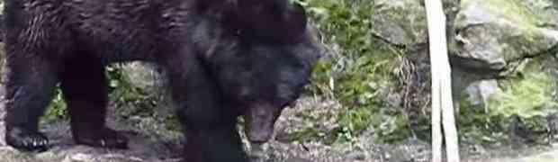 Stali su ispred jednog usamljenog crnog medvjeda u zoološkom vrtu. Nisu mogli ni sanjati da će tog dana snimiti OVO! (VIDEO)