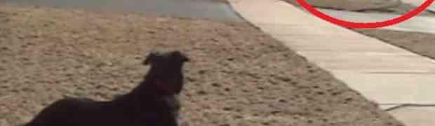 Zašto pas čeka školski autobus: Odgovor će vas dirnuti pravo u srce! (VIDEO)