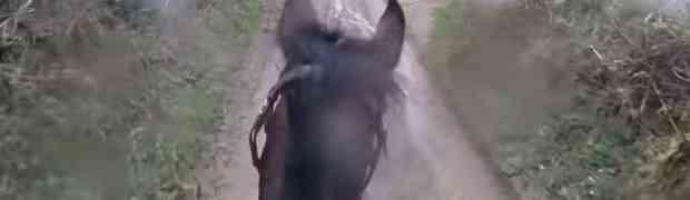 Sjeo je na starog trkaćeg konja i krenuo u šetnju šumom. Samo par trenutaka kasnije, doživio je nešto što će DUGO PAMTITI (VIDEO)
