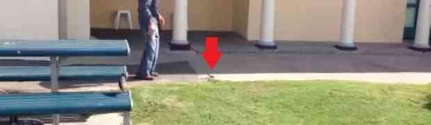Hodao je dvorištem, a onda je na zemlji ugledao otrovnu zmiju. Kada vidite šta je uradio ovaj čiča UHVATIĆETE SE ZA GLAVU! (VIDEO)