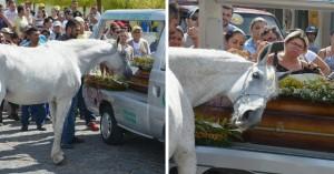 konj-f