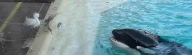 Ono što je ova orka uradila će vas ostaviti u šoku (VIDEO)