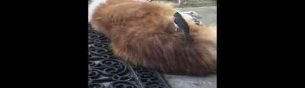 Nećete vjerovati šta je ova ptica uradila, a pas mrtav hladan (VIDEO)