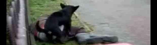 Nećete vjerovati šta je uradio ovaj pas kada je pronašao pijanog čovjeka na ulici (VIDEO)